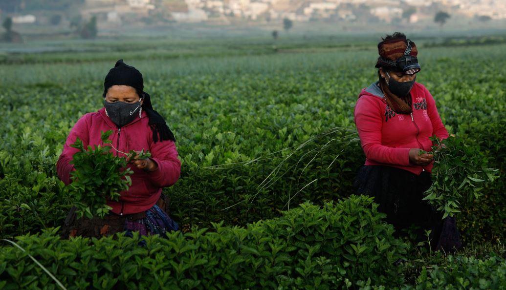 Los agricultores trabajan desde las 4 de la mañana para garantizar la producción de alimentos. (Foto: DCA)