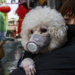 coronavirus a mascotas