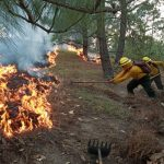 Los incendios forestales consumen gran parte de las áreas protegidas en Petén. Muchos animales huyen de los incendios en la zona. (Foto: CONRED)