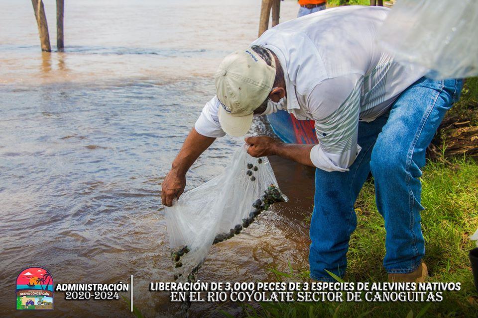 Liberan peces en el río Coyolate