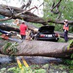 Joudas Miranda de 27 años, falleció al momento en que un árbol cayó encima de su vehículo. (Foto: BMD, Ejército de Guatemala y Cruz Roja