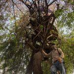 Daniel junto al árbol en donde vive en Ciudad de Guatemala