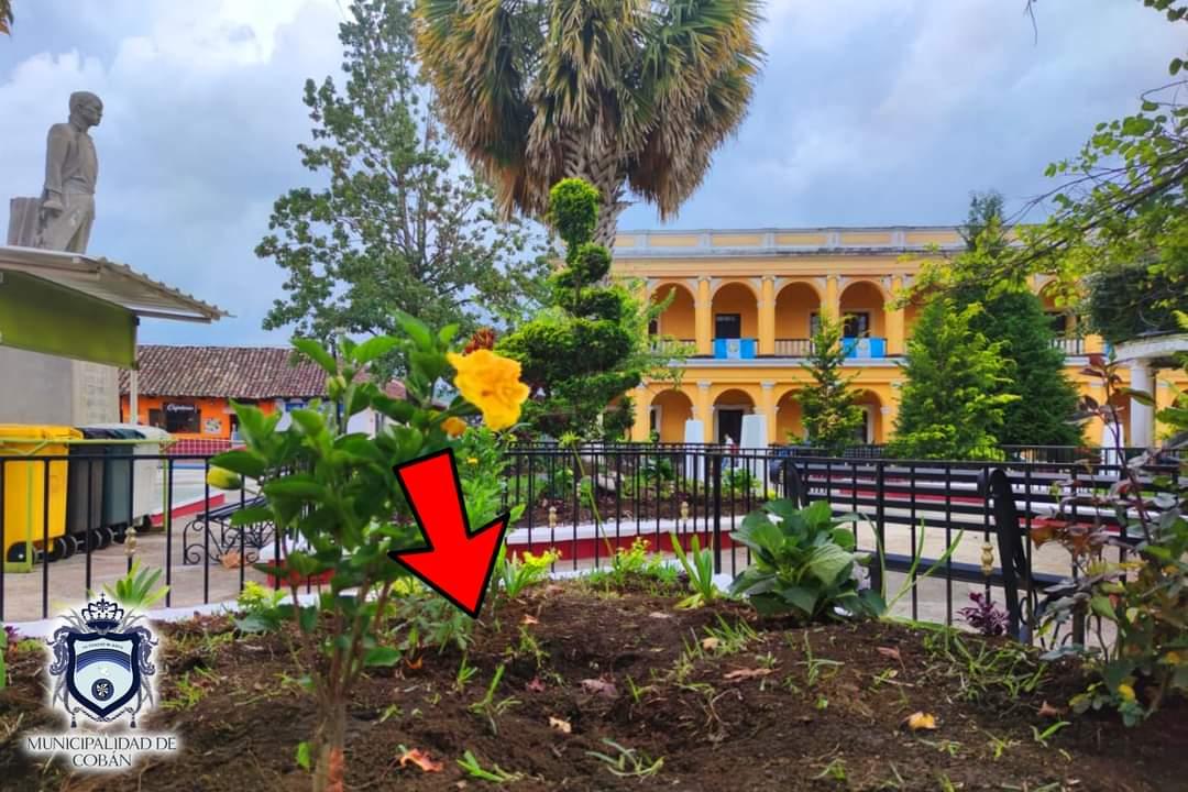 """Hace dos días la Municipalidad de Cobán inauguró el proyecto """"Cobán Verde"""" y sembró las plantas que fueron sustraídas el jueves por la noche. (Foto: Cortesía)"""