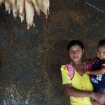 Autoridades regionales alertaron este jueves de un aumento en la inseguridad alimentaria y la desnutrición infantil aguda en la región fronteriza que comparten El Salvador, Guatemala y Honduras