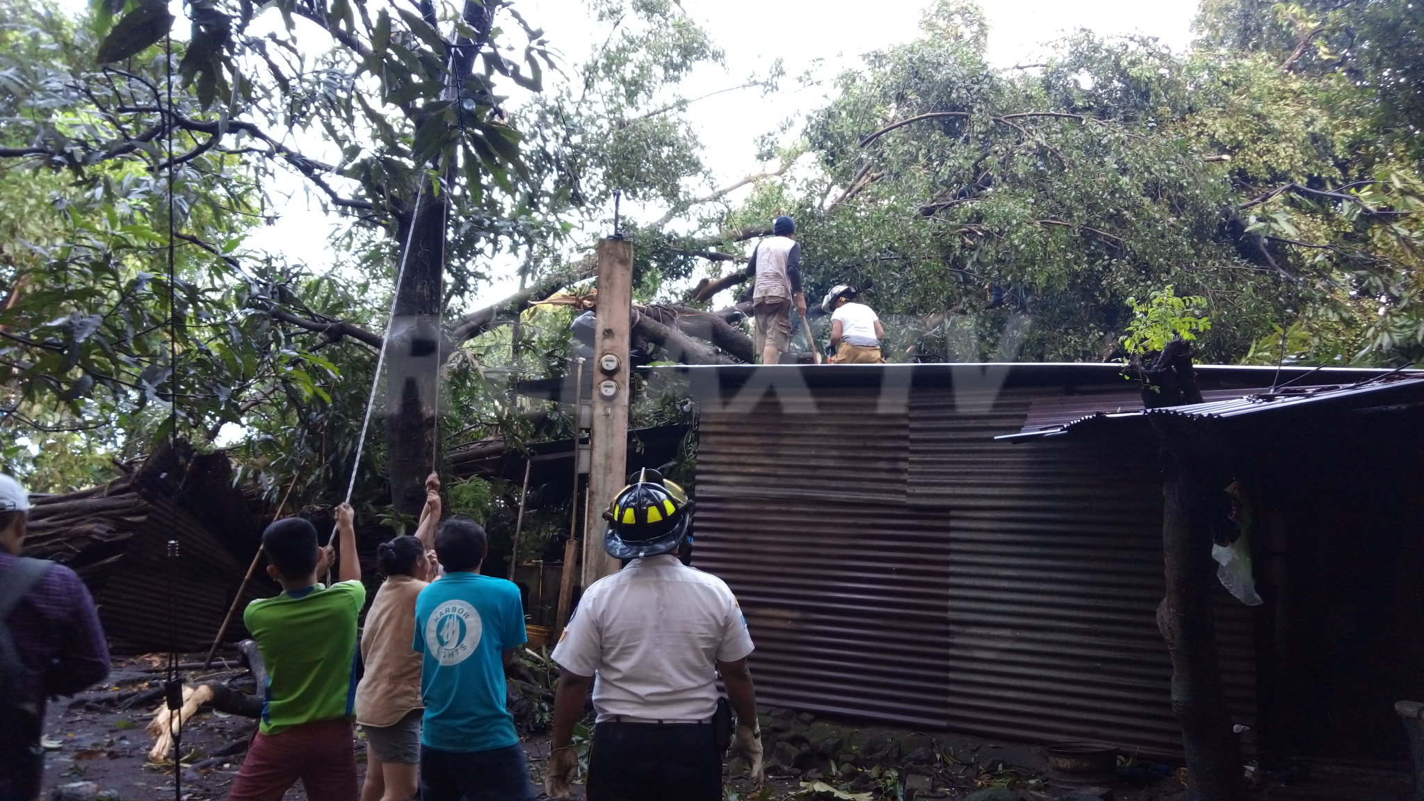 Dos viviendas quedaron dañadas por la caída de dos árboles en Santa Lucía Cotzumalguapa, Escuintla. (Foto: Cristian Soto)