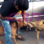 Vecinos de distintas zonas de Quetzaltenango, advirtieron que sacrificarán perros de razas peligrosas debido a los constantes ataques.