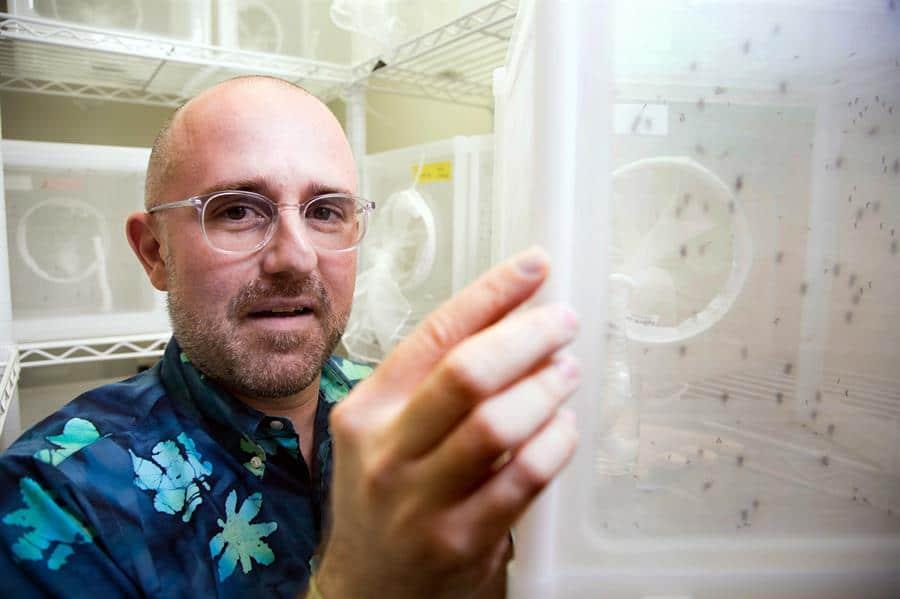Fotografía sin fecha cedida por la Universidad Internacional de Florida (FIU), donde aperece el neurogenetista Matthew DeGennaro, del Instituto de Ciencias Biomoleculares de la universidad, quien dirige la investigación del microbioma de la piel humana y su uso para la fabricación de un repelente natural eficaz y de larga duración contra los mosquitos. EFE/FIU