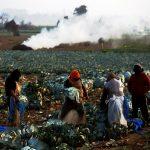 La Cámara del Agro de Guatemala presentó sus perspectivas para 2021, que se prevén más favorables para el sector que los resultados del año pasado.