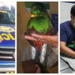 Un vecino de Mazatenango, Suchitepéquez, rescató la mañana de este martes a un Quetzal, el ave nacional símbolo de Guatemala. El ave se encontraba en un árbol de su casa.