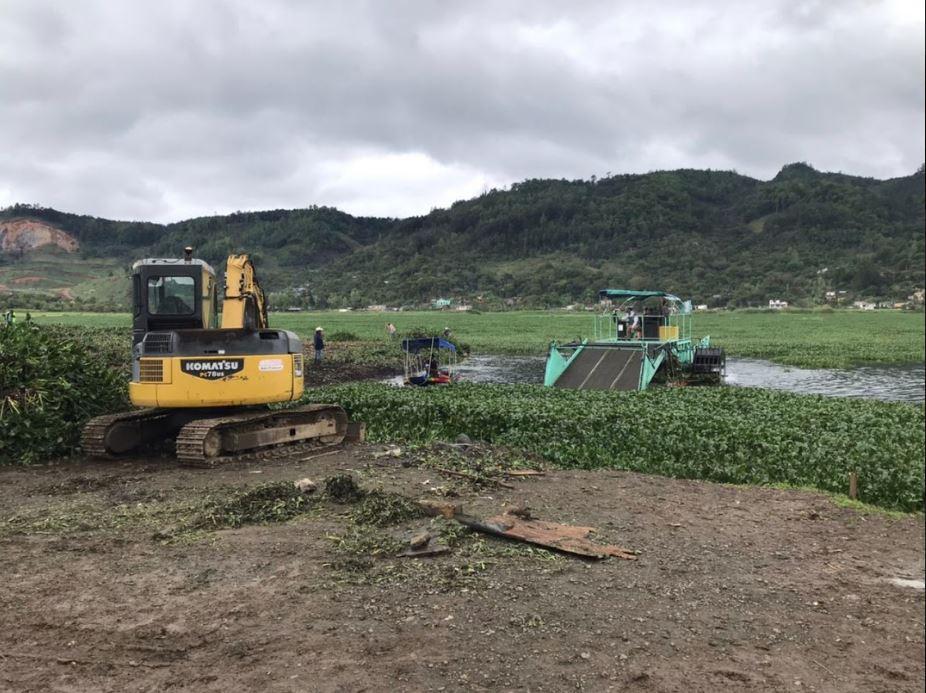 Alta Verapaz: Extraen más de mil 700 toneladas de ninfa de la laguna Chichoj