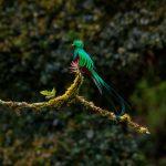 Biotopo del Quetzal: El recinto sagrado de nuestra ave nacional