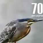 EntreCultura 158: 700 motivos para pajarear aves en Guatemala