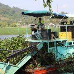 El Ministerio de Ambiente y Recursos Naturales -MARN- informó que se han extraído mil 740 toneladas de ninfa de la laguna Chichoj, en Alta Verapaz.