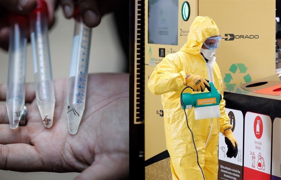 Wolbachia, bacteria que se ha convertido en la esperanza de la comunidad científica mundial en la lucha contra el dengue. Esto conforme a una investigación en desarrollo que ya ha empezado a arrojar resultados prometedores en Indonesia.