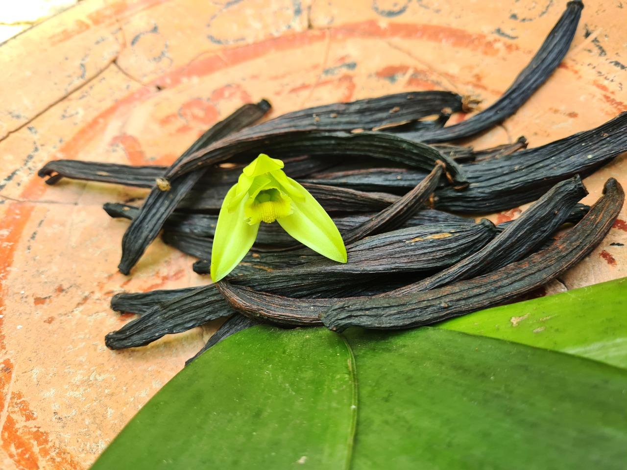La vainilla... ¿una orquídea?