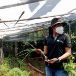 Cientos de campesinos maya ch'orti' que habitan el corredor seco combaten los efectos del cambio climático con técnicas de cosecha sostenible; además de seguridad alimentaria y de economía familiar con un proyecto de investigación agrícola.